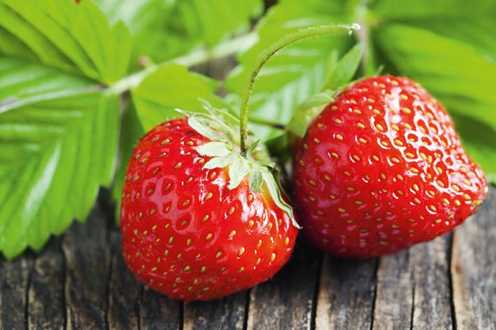 Pourquoi retrouve-t'on des fraises en automne ?